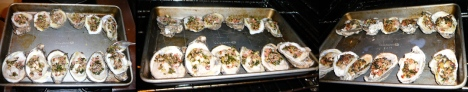 oysters bang-a-feller fill broil